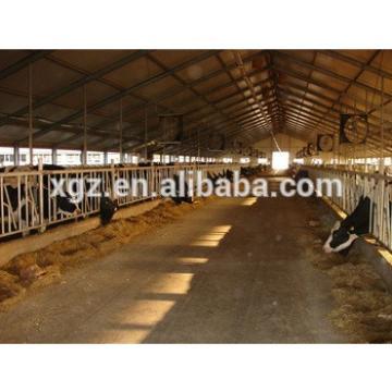 modern specialized cow cattle farm